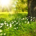 La primavera è la stagione ideale per il rinnovo della casa