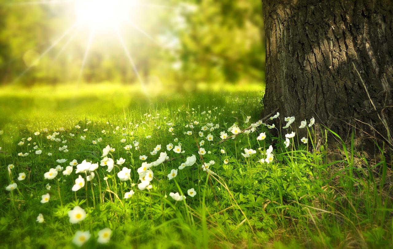Primavera, la stagione ideale per rinnovare casa
